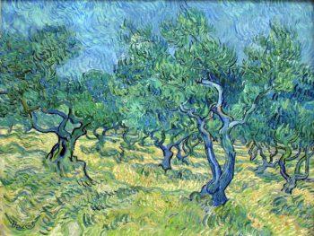 Vincent van Gogh, Olijfgaard, 1889