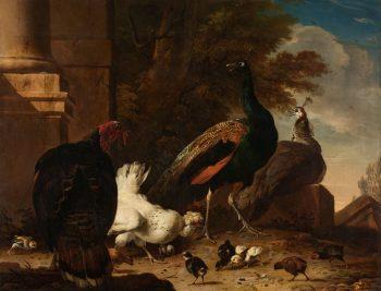 Een hen met pauwen en een kalkoen, Melchior d'Hondecoeter, ca. 1680