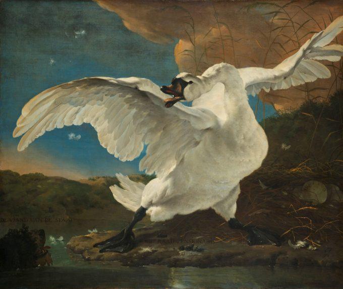 Jan Asselijn, De bedreigde zwaan, ca. 1650