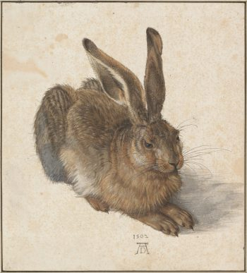Jonge haas. Albrecht Dürer, 1502