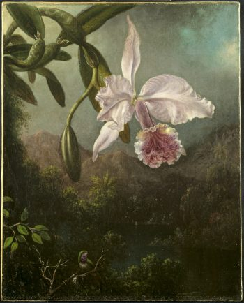 Bloeiende orchidee, Martin Johnson Heade, 1873
