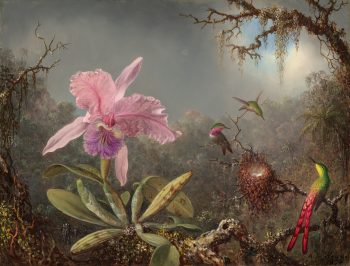 Cattleya Orchidee met drie kolibries,  Martin Johnson Heade, 1871